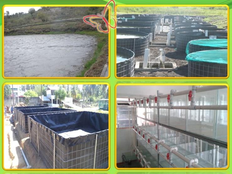 5 Acuicultura e incubación